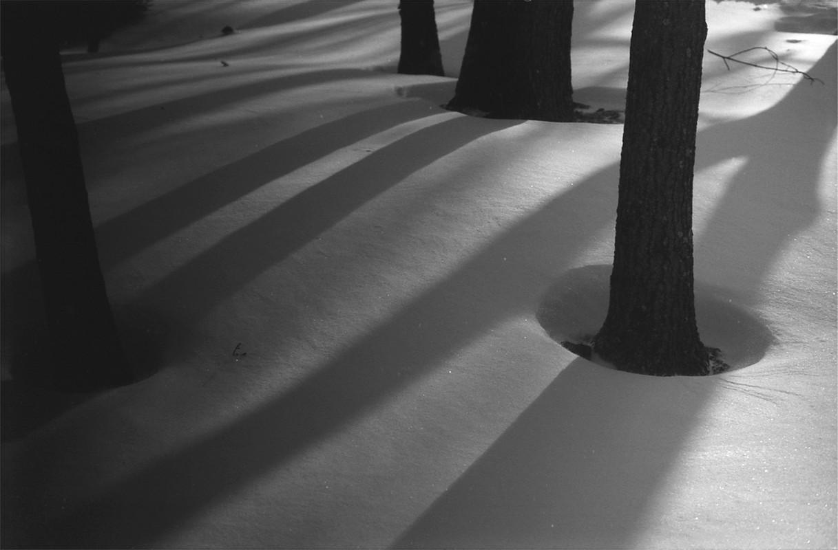 Artwork – Tree Holes, 2009