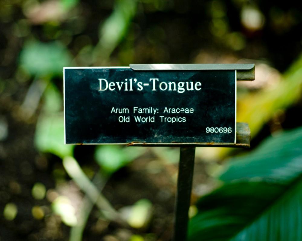 """Artwork – Plant Poems: """"Devil's - Tongue"""", 2010"""