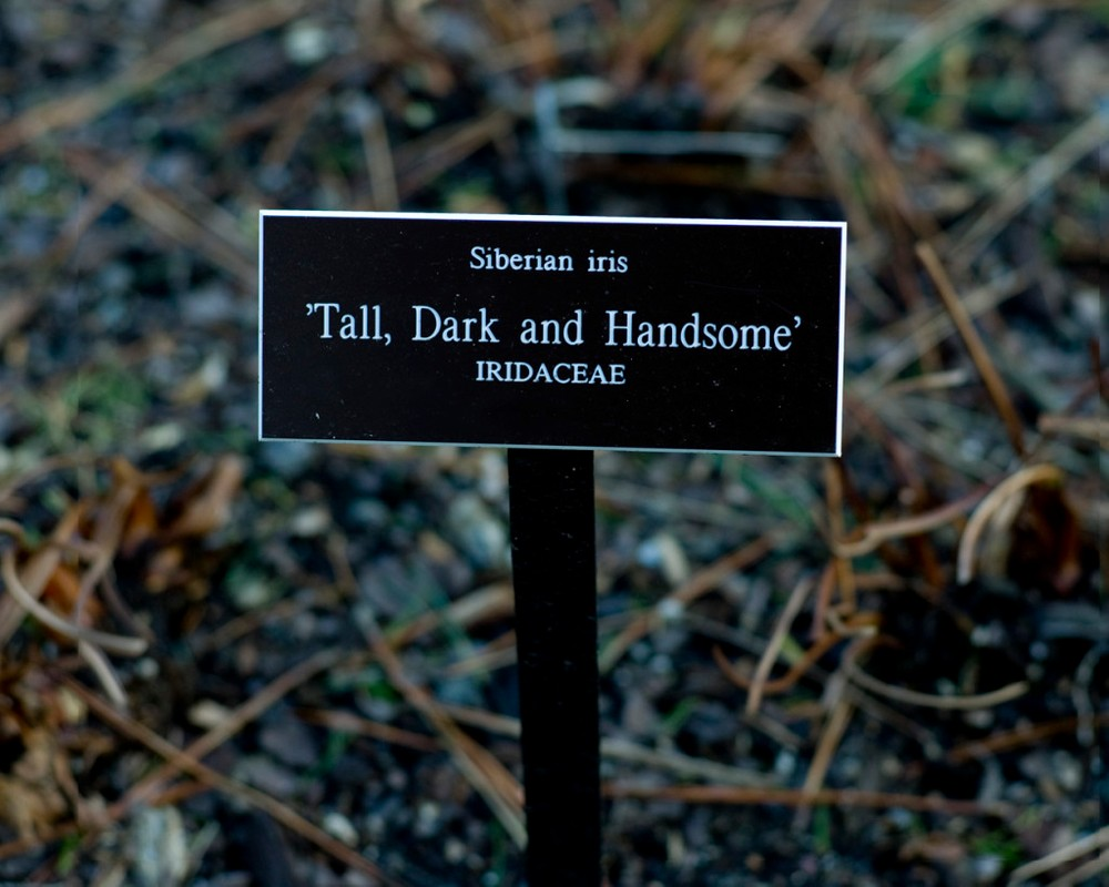 """Artwork – Plant Poems: """"Tall, Dark, and Handsome"""", 2010"""