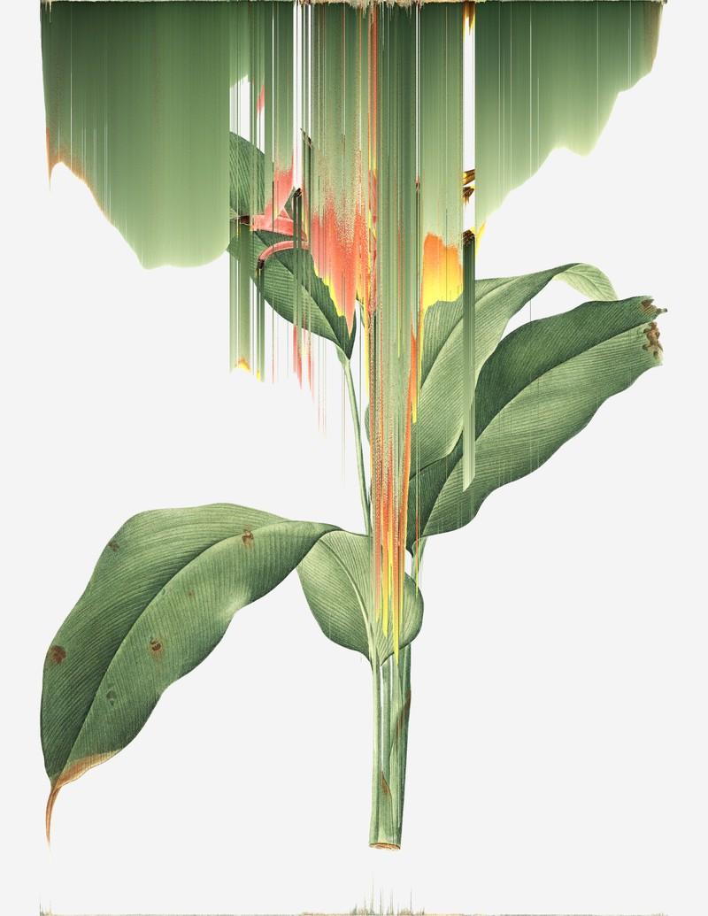 Artwork – Heliconia Psittacorum, var. 018, 2020
