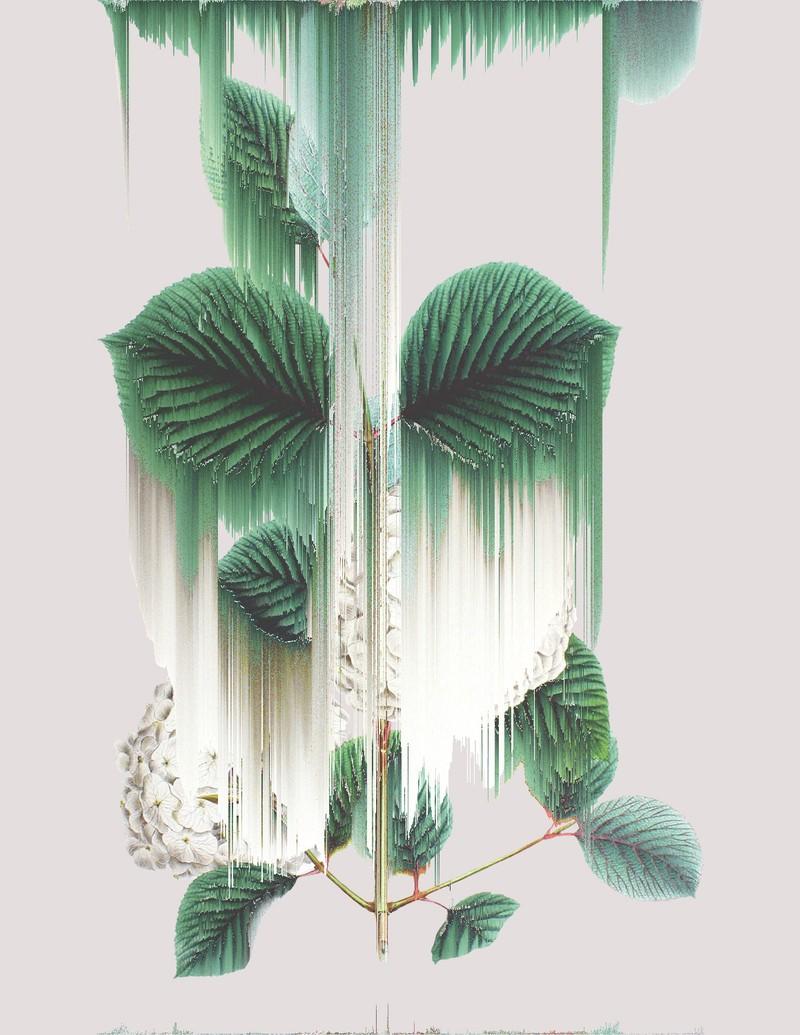 Artwork – Viburnum Plicatum, var. 022, 2020