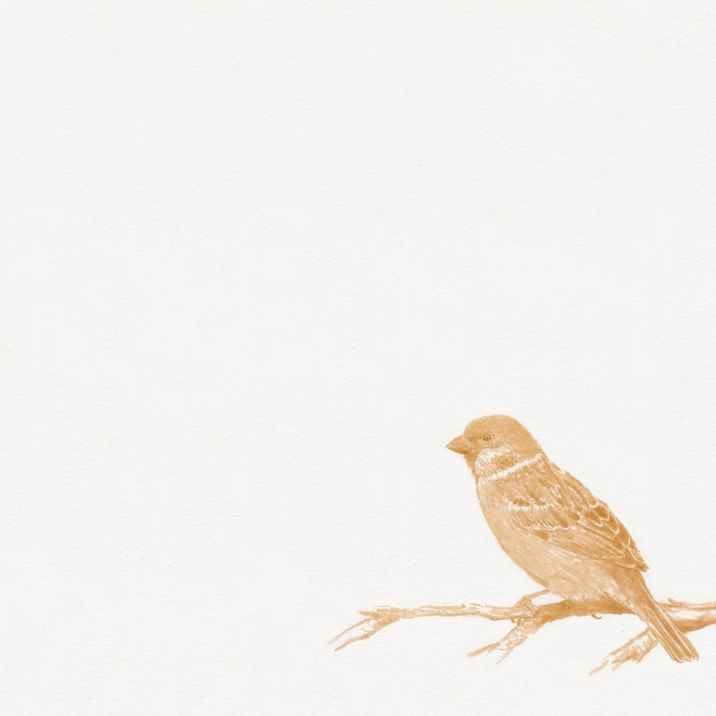 Artwork – Sparrow, 2008