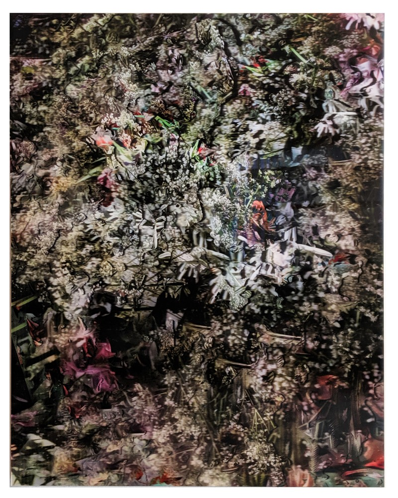Artwork – Grandpa's Flowers Post-Mortem (Focus Stack, 74 Images, Re-stacked 5 Times Upon Itself), Lenticular Print, 2017