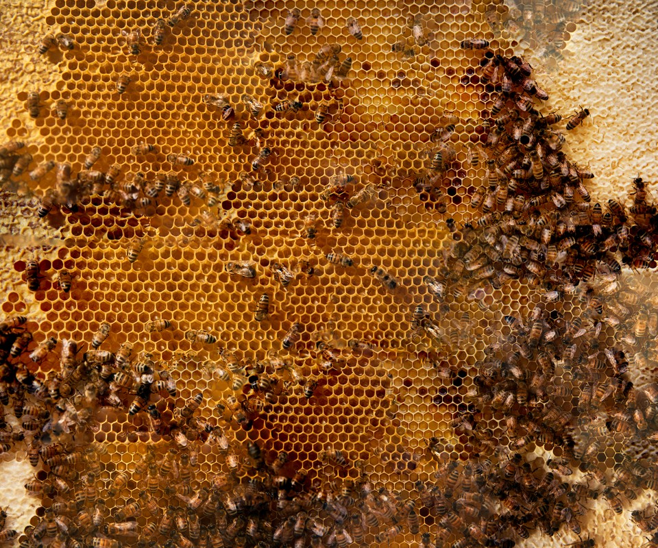 Artwork – Hive No. 1 (12 Images), 2019