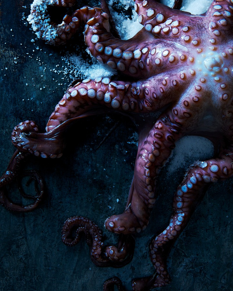 "Artwork – James Ransom, ""Octopus"", 2016"