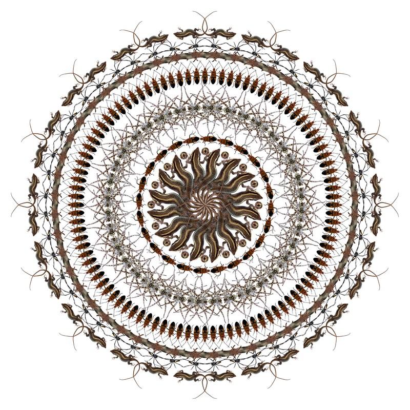 "Artwork – Pippip Ferner, ""African Flower 2"", 2013"