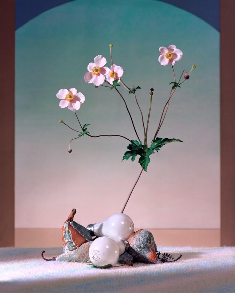 Artwork – Flowers, Pears, and Bulbs, 2016