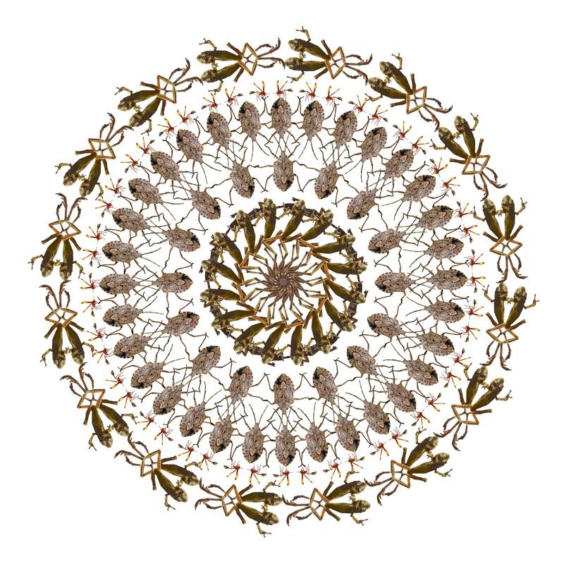 "Artwork – Pippip Ferner, ""African Flower 1"", 2013"