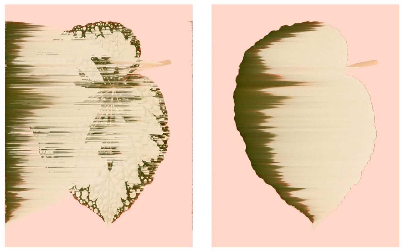 Artwork – Begonia Rex-Cultorum, vars. 042, 018, 2020