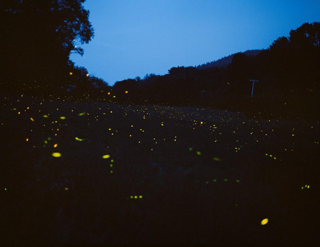 Artwork – Fireflies, 2013