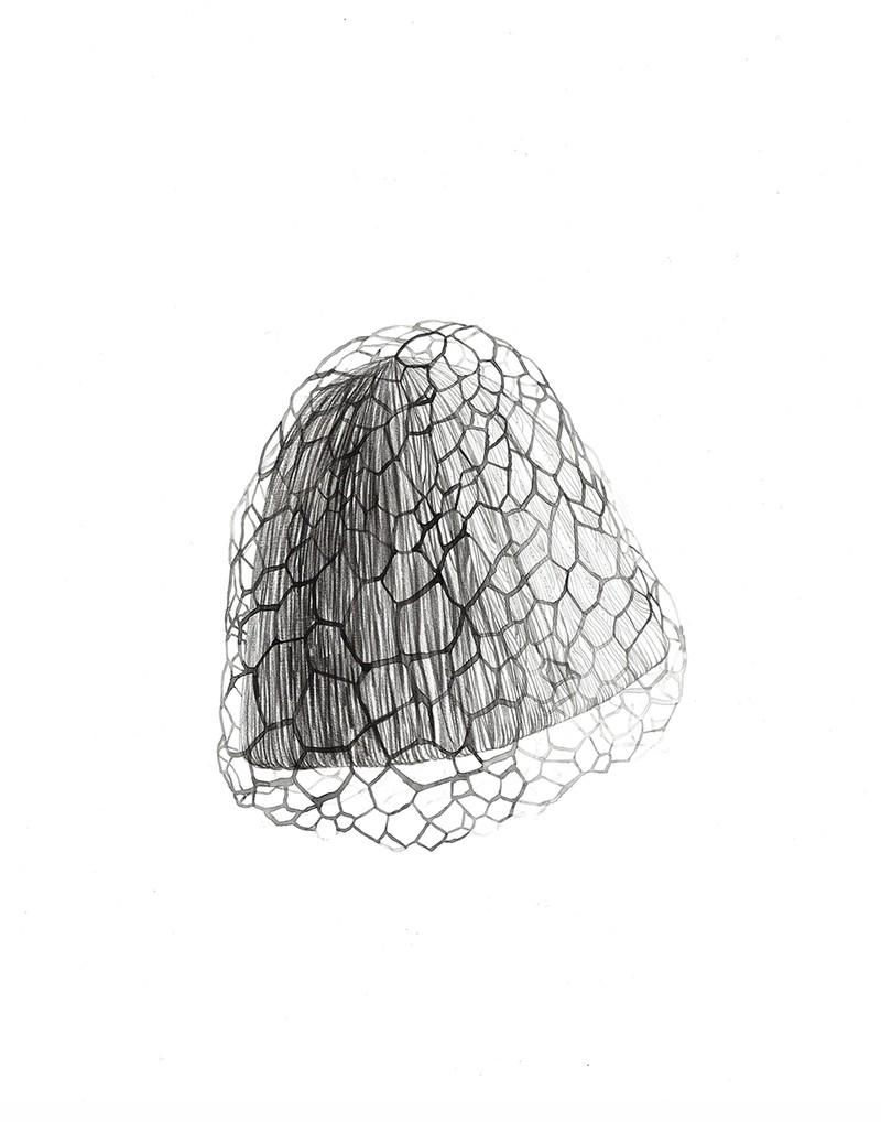 Artwork – Mushroom With Net, 2020