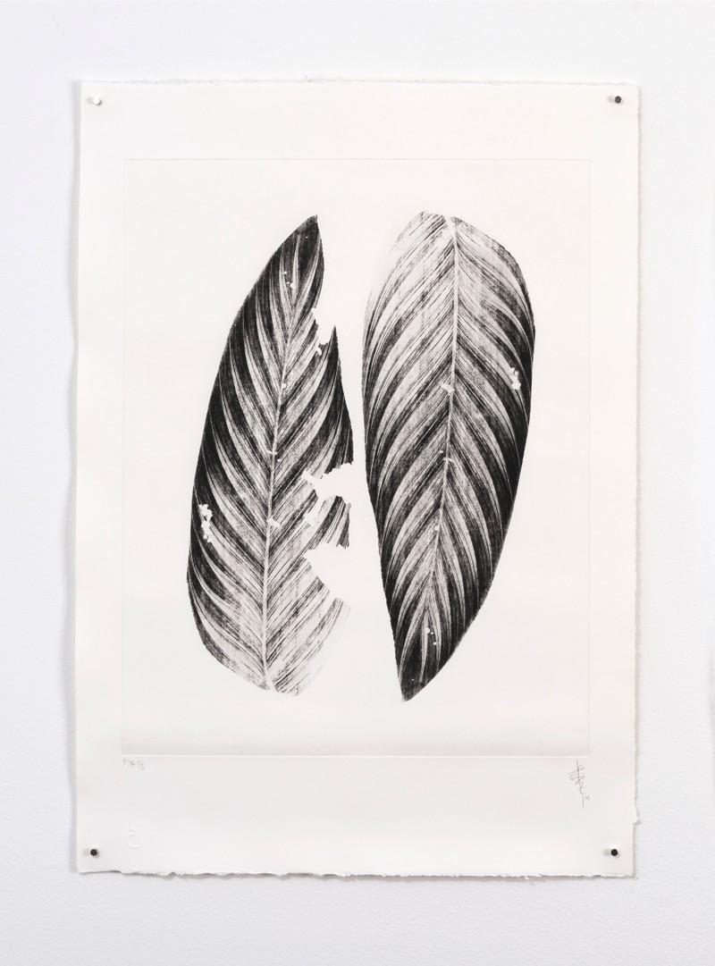 Artwork – Dos hojas del paraíso, 2019
