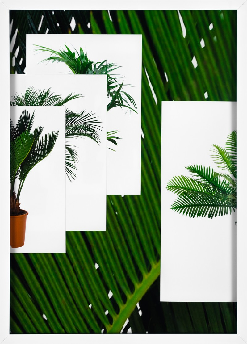 Artwork – Palm (Desktop), 2016