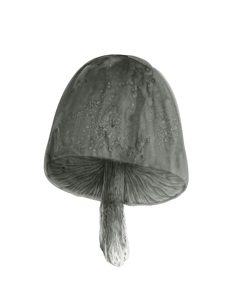 Artwork – Black Mushroom, 2020