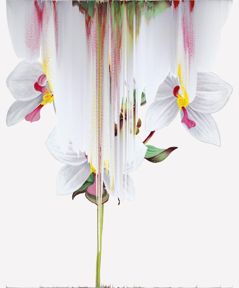 Artwork – Agrostophyllum Philippinense,var. 021, 2020