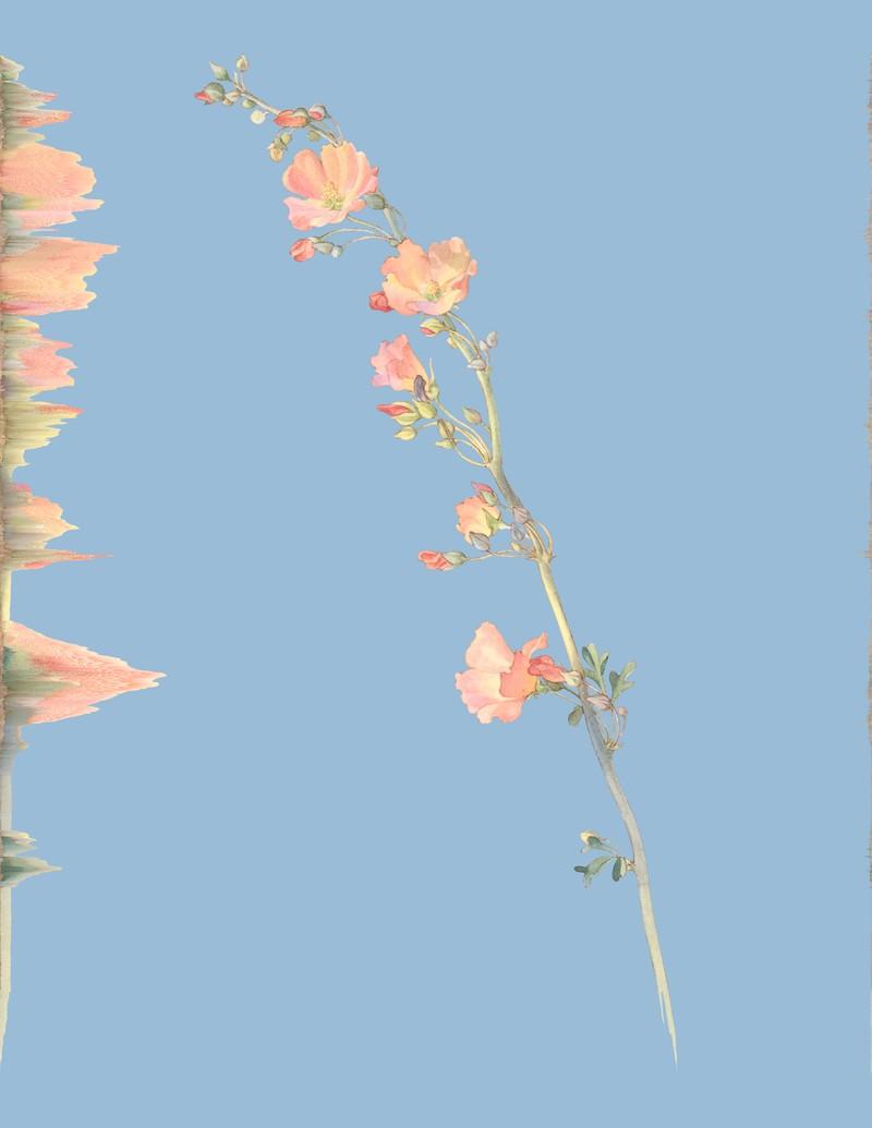 Artwork – Sphaeralcea Munroana, var. 013, 2020