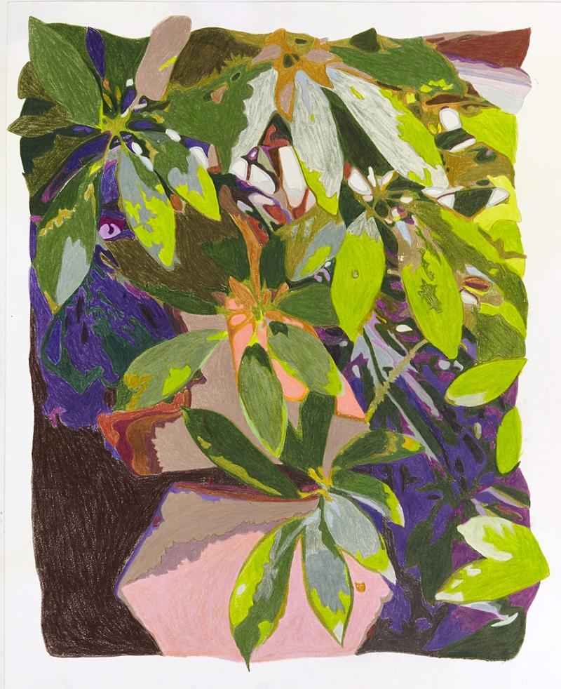 Artwork – umbrella plant (Frank Lloyd Wright's sun room), 2018