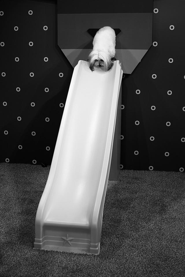 Artwork – Doggy Slide, 2019