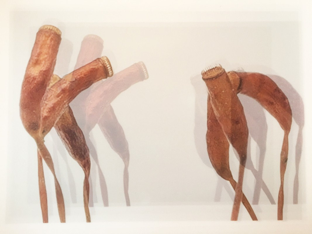 Artwork – Hanging Sphagnum, 2017