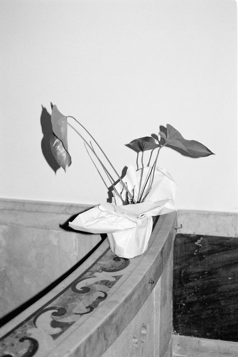 Artwork – Plant, 2018