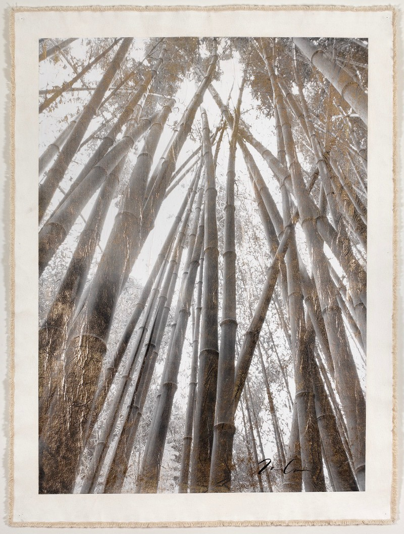 Artwork – Bamboo Forest Canopy, 2016