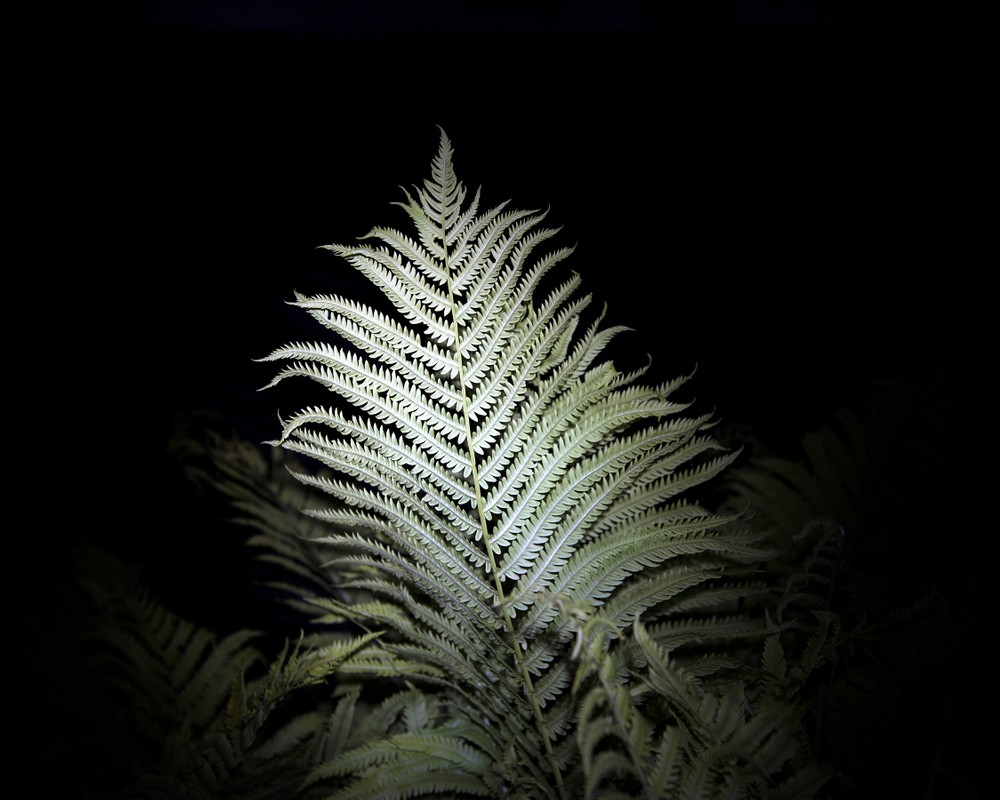 Artwork – Untitled (fern) from the series, Hide the Sun, 2017