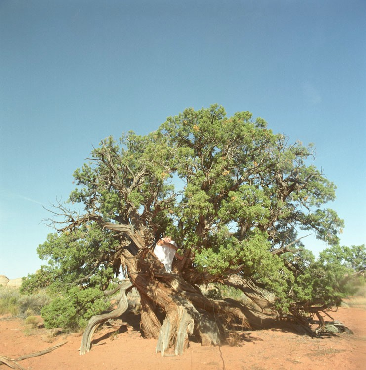 Artwork – Tree Bed, Utah, 2000