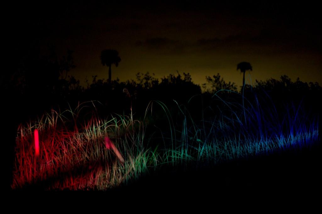 Artwork – Everglades 2, 2015