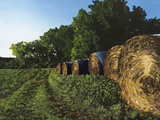 Morning Bales by Kristin Stoeffler