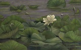 Water Lilly by Danielle Shier