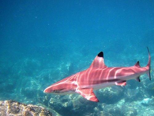 Partial Mystery: SHARKS  | Events Calendar