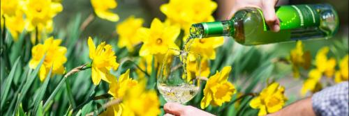 """DAFFODIL CELEBRATION AND WINE WEEKEND""  