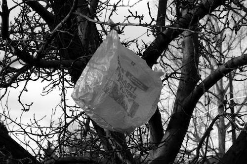 Plastic Bag in a Tree  | Events Calendar
