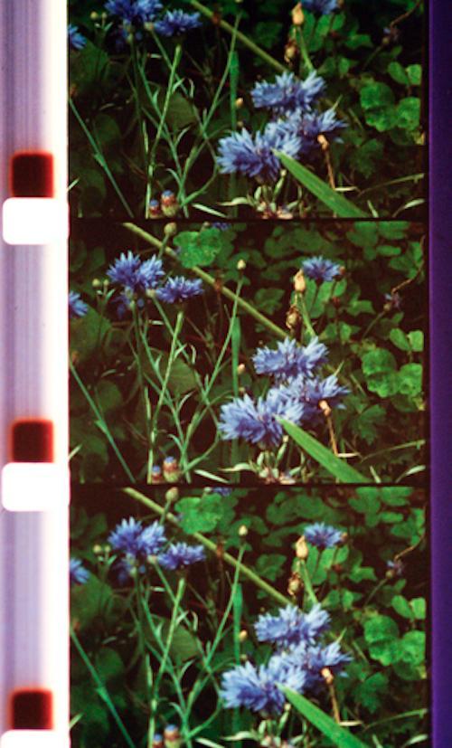 Robert Beavers Presents Seven Films by Renate Sami    Events Calendar
