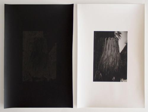 "Allison Somers ""Phototropism"" | Events Calendar"