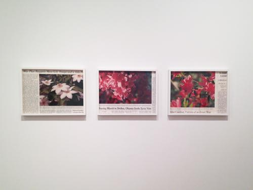 in Pictures for 'Burying the Lede' at Momenta Art. Image for  Becca Albee in 'Burying the Lede' at Momenta Art