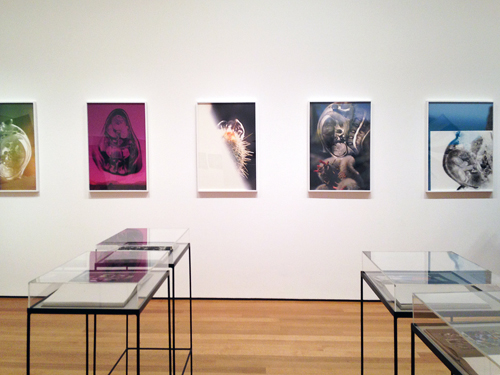 in Pictures for 'New Photography 2013' at MoMA. Image for 'New Photography 2013' at MoMA
