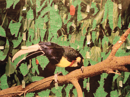 in Pictures for Sara Cwynar at Foxy Production. Image for Sara Cwynar, Toucan In Nature (Post It Notes), 2013, Chromogenic print mounted on Plexiglas, 30 x 40 in. Courtesy of the artist and Foxy Production, New York.