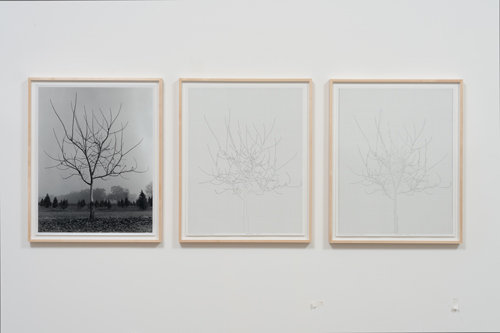 in Pictures for 'Charles Gaines: Gridwork 1974–1989' at The Studio Museum in Harlem. Image for Charles Gaines, Walnut Tree Orchard, Set 1 (version 2), 1975– 2014, Photograph, ink on paper, Triptych: 29 × 23 in. each; 311⁄2 × 251⁄2 × 11⁄2 in. (framed). Courtesy the artist and Susanne Vielmetter Los Angeles Projects. Photo: Robert Wedemeyer