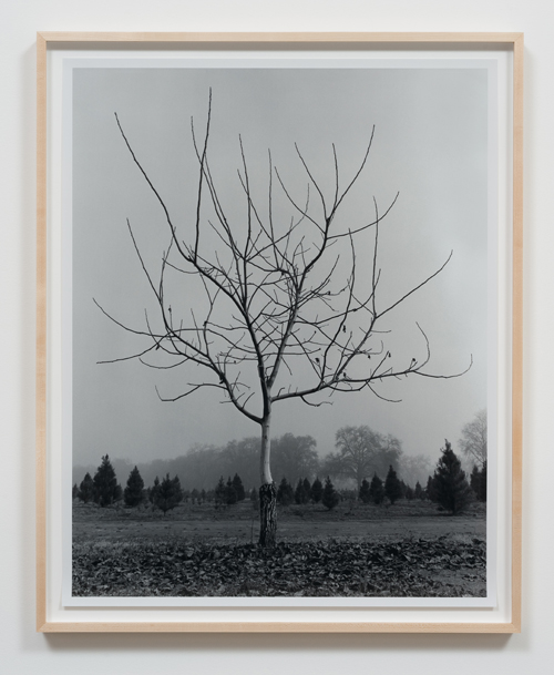 in Pictures for 'Charles Gaines: Gridwork 1974–1989' at The Studio Museum in Harlem. Image for Charles Gaines, Walnut Tree Orchard, Set 1 (version 2) (detail), 1975–2014, Photograph, ink on paper, Triptych: 29 × 23 in. each; 311⁄2 × 251⁄2 × 11⁄2 in. (framed). Courtesy the artist and Susanne Vielmetter Los Angeles Projects. Photo: Robert Wedemeyer