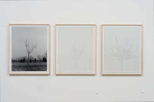 in Pictures for 'Charles Gaines: Gridwork 1974–1989' at The Studio Museum in Harlem. Image for Charles Gaines, Walnut Tree Orchard, Set 2 (version 2), 1975– 2014, Photograph, ink on paper, Triptych: 29 × 23 in. each; 311⁄2 × 251⁄2 × 11⁄2 in. (framed). Courtesy the artist and Susanne Vielmetter Los Angeles Projects. Photo: Robert Wedemeyer