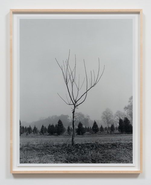 in Pictures for 'Charles Gaines: Gridwork 1974–1989' at The Studio Museum in Harlem. Image for Charles Gaines, Walnut Tree Orchard, Set 2 (version 2) (detail), 1975–2014, Photograph, ink on paper, Triptych: 29 × 23 in. each; 311⁄2 × 251⁄2 × 11⁄2 in. (framed). Courtesy the artist and Susanne Vielmetter Los Angeles Projects. Photo: Robert Wedemeyer