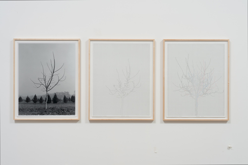 in Pictures for 'Charles Gaines: Gridwork 1974–1989' at The Studio Museum in Harlem. Image for Charles Gaines, Walnut Tree Orchard, Set 3 (version 2), 1975– 2014, Photograph, ink on paper, Triptych: 29 × 23 in. each; 311⁄2 × 251⁄2 × 11⁄2 in. (framed). Courtesy the artist and Susanne Vielmetter Los Angeles Projects. Photo: Robert Wedemeyer