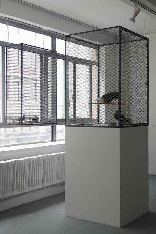 "in Pictures for As We Were Saying: Art and Identity in the Age of ""Post"" at Elizabeth Foundation for the Arts (EFA). Image for Michael Wang, Captives (Rock Pigeons), 2014, Feral pigeons, fancy pigeons, steel enclosures, Dimensions variable. Courtesy of the artist and Foxy Production, New York"