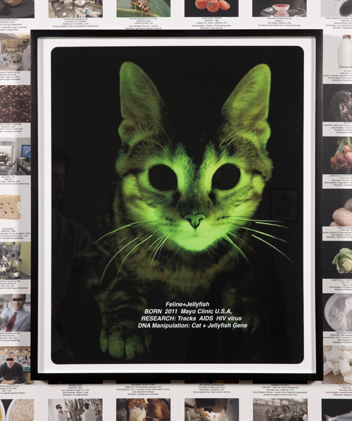 in Pictures for Lynn Hershman Leeson at Bridget Donahue. Image for Lynn Hershman Leeson, 'Glo Cat,' 2013, Digital Print, 24.5 x 20.5 inches (62.23 x 52.07 cm), Edition 1/5 + I AP. Courtesy Bridget Donahue, New York
