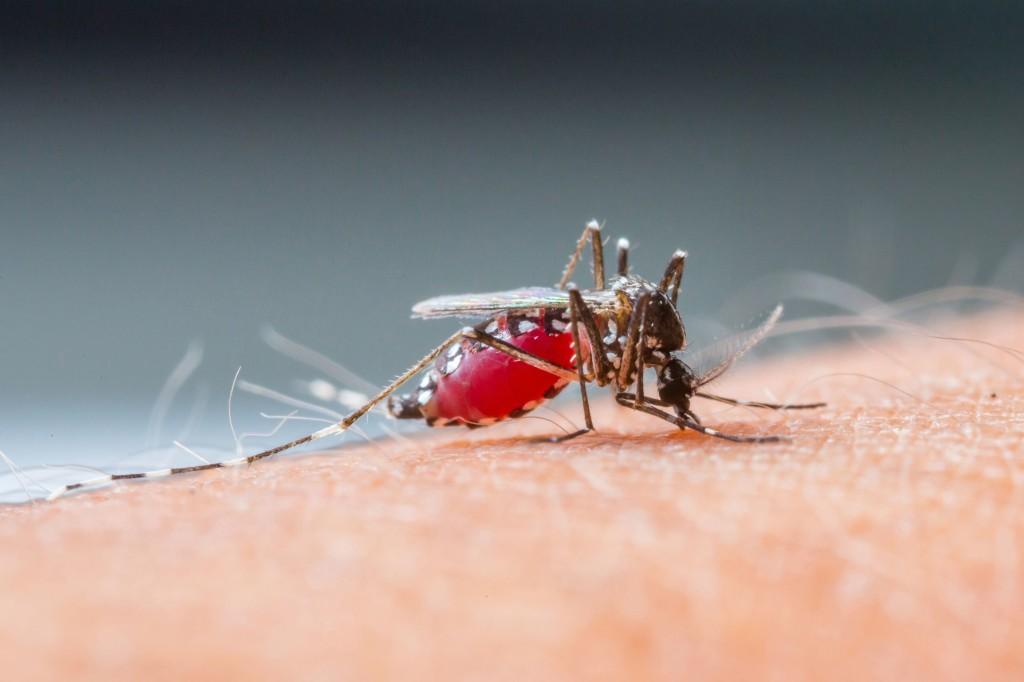 emergencia mundial por el virus Zika