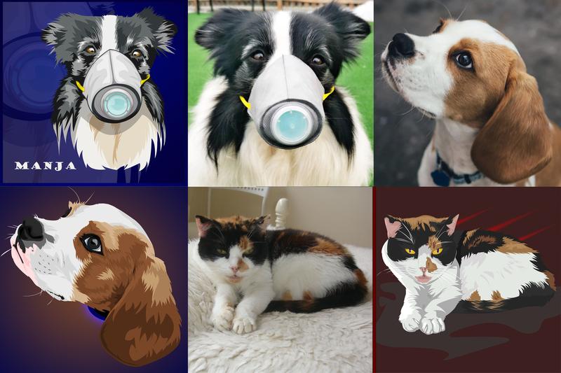 Pet Vector Illustration