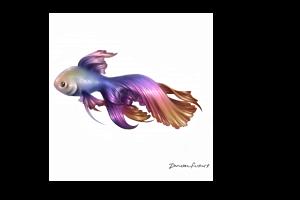 Rainbow Betta Fish Tattoo Design Artists Clients