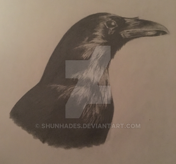 Portrait Animal Drawing - Hard Copy
