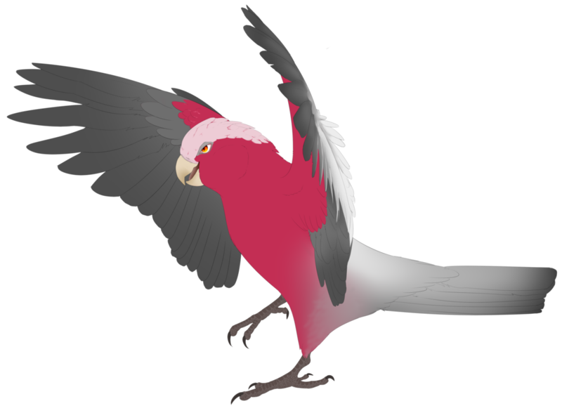 Colored cartoon bird